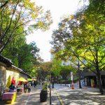 ソウル秋の紅葉を楽しもう!徳寿宮通り(トクスグンキル)