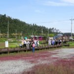 韓国の曽島、ユネスコ保存地域の太平塩生植物園⑤大人の修学旅行